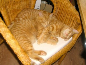 photo of two ginger cats