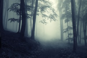 A picture of a forest path in the fog