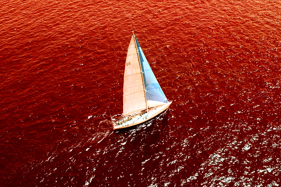 Sailboat in an ocean of blood