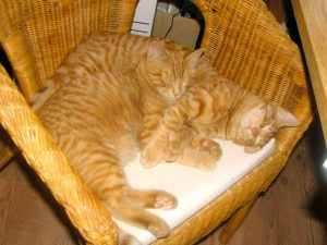 two ginger kittens in a chair