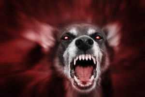 mean barking dog with red eyes