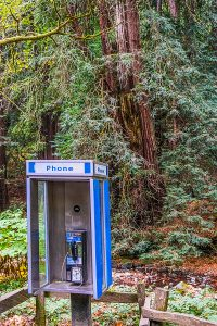 photo pf payphone in forest